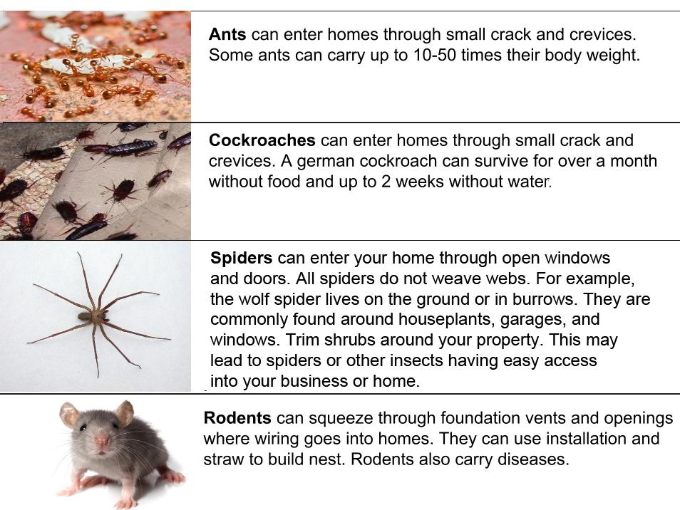 common_pests